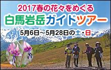 春の花をめぐる 白馬岩岳ガイドツアー